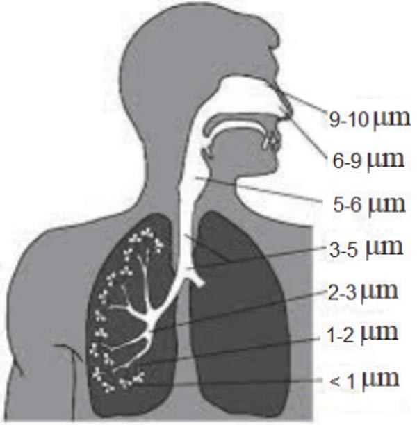 Dust particle deposition in the respiratory system