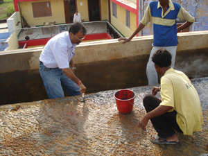 Dr Fixit S Terrace Waterproofing Solutions